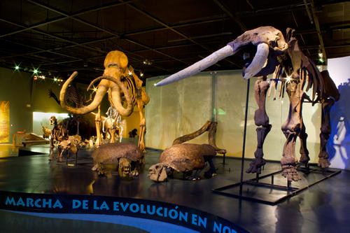 museo del desierto museos m233xico sistema de